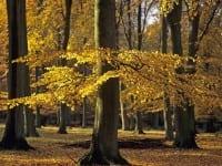 Gå efteråret i møde