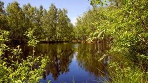 bognæsskov