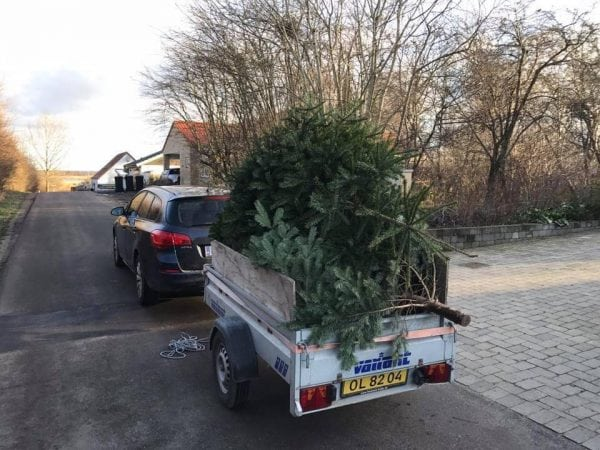 Visne juletræer gavner god sag