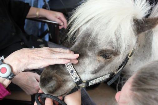 Heste besøger plejecenter