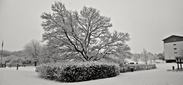 Snevejret i Agervang