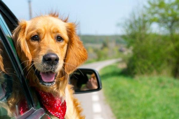 Gode råd til ferie med kæledyr