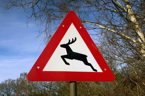 Undgå påkørsel af dyr