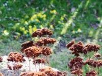 Forårstilbud på fliserens