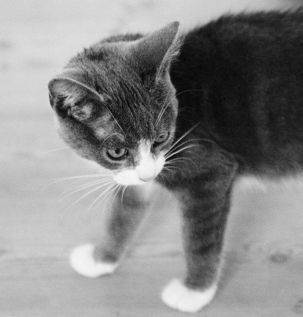 Kom til Kattens weekend i Maxi Zoo Holbæk