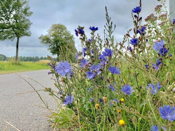 Blomster i grøftekanten