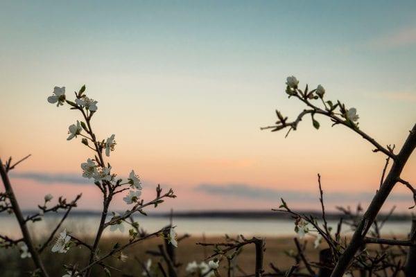 Skønne billeder fra Tuse Næs
