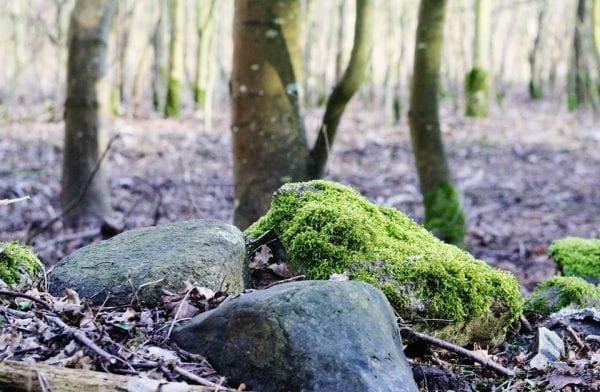 Geologiens Dage: Har du jord i hovedet?