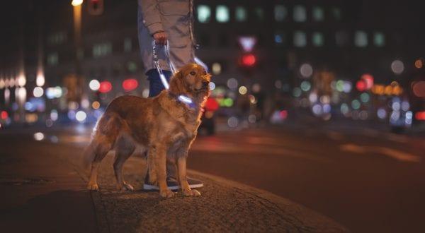 Pas på din vovse på gåturen i mørket