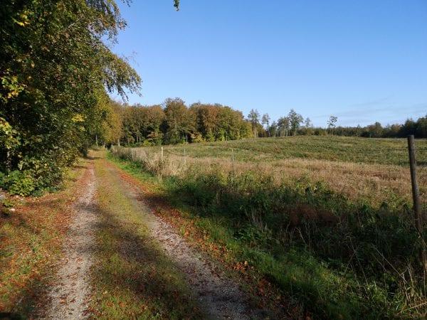Dejlig oktober-dag i Dragerup Skov
