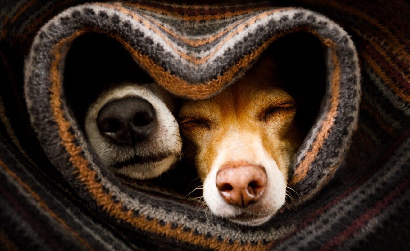 Kærlighedstur for Holbæks hunde