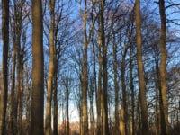 Skøn sol i skoven