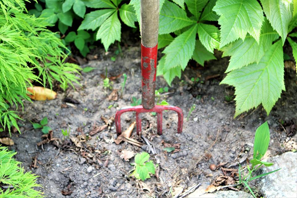 Pas på i haven