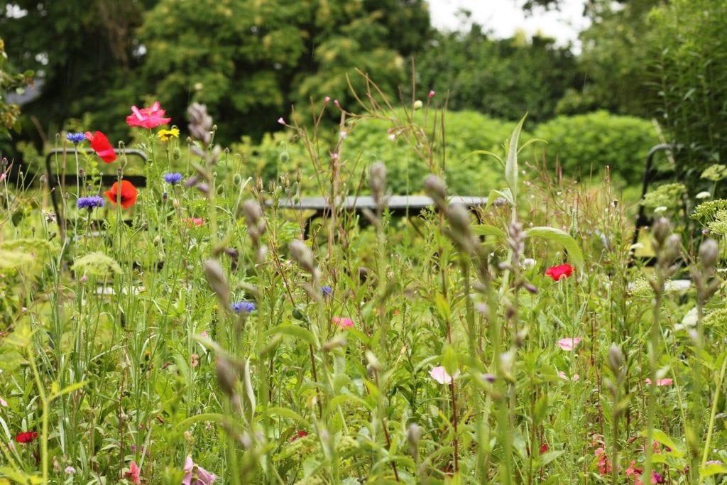 Golfbane-græs eller vild blomstereng