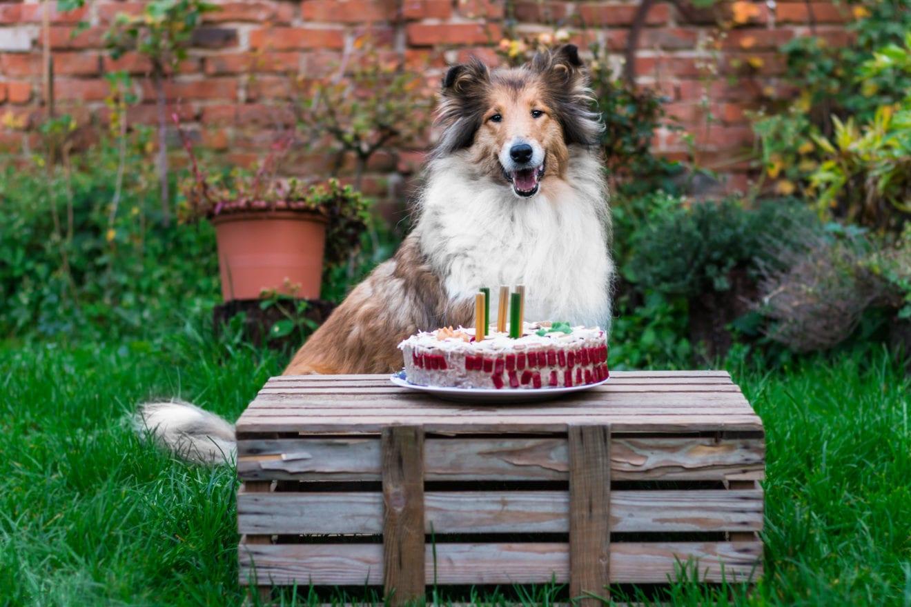 Gratis fødselsdagsgaver til kæledyr i Holbæk