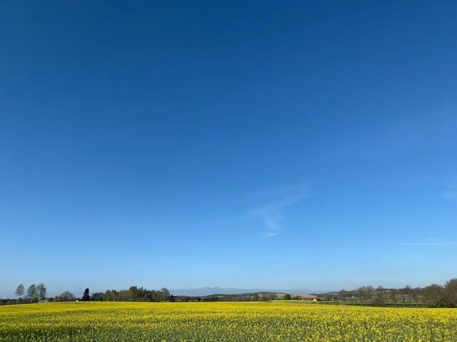 Sol på gule marker