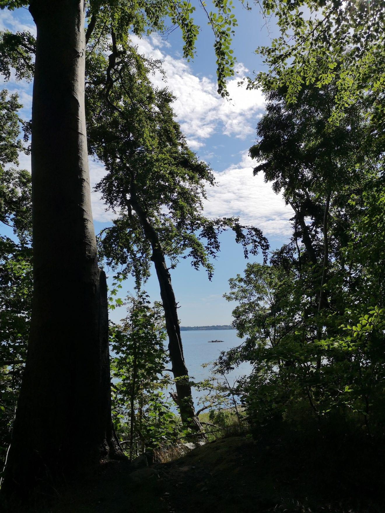 Sø, skyer og skov