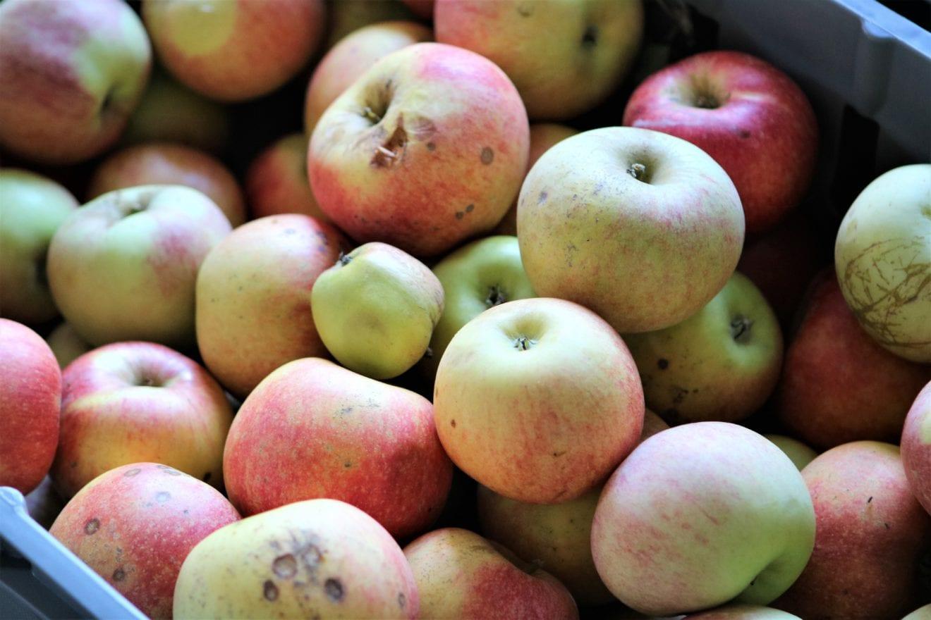 Æbledage