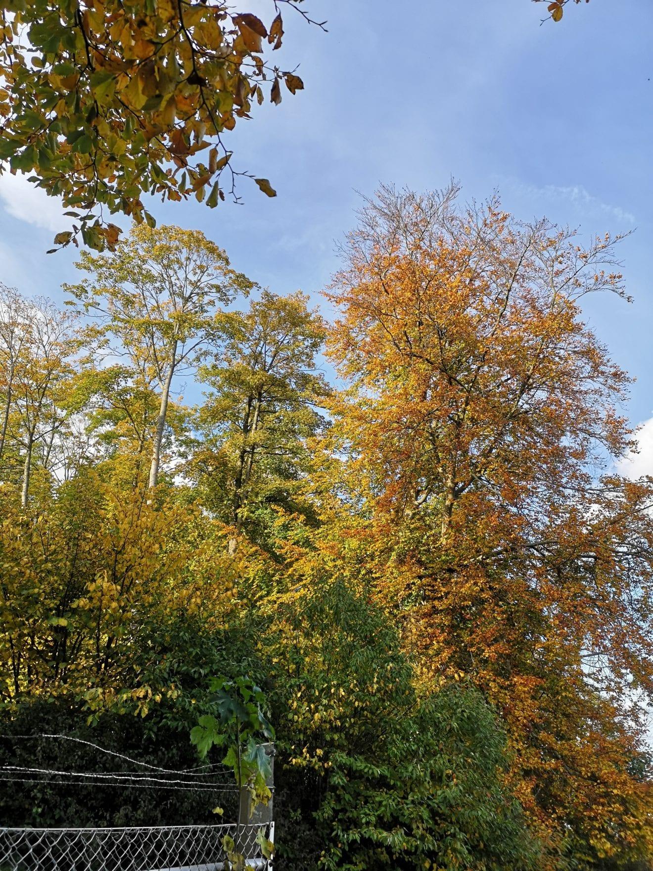 Efterårsfarver i Dragerup Skov
