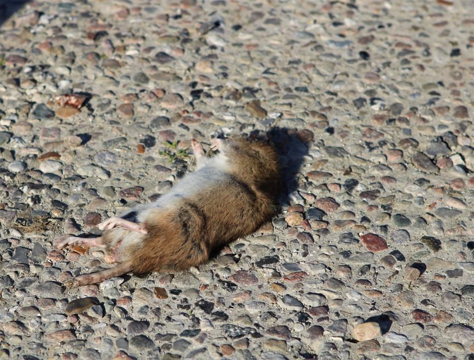 Husk at anmelde rotter