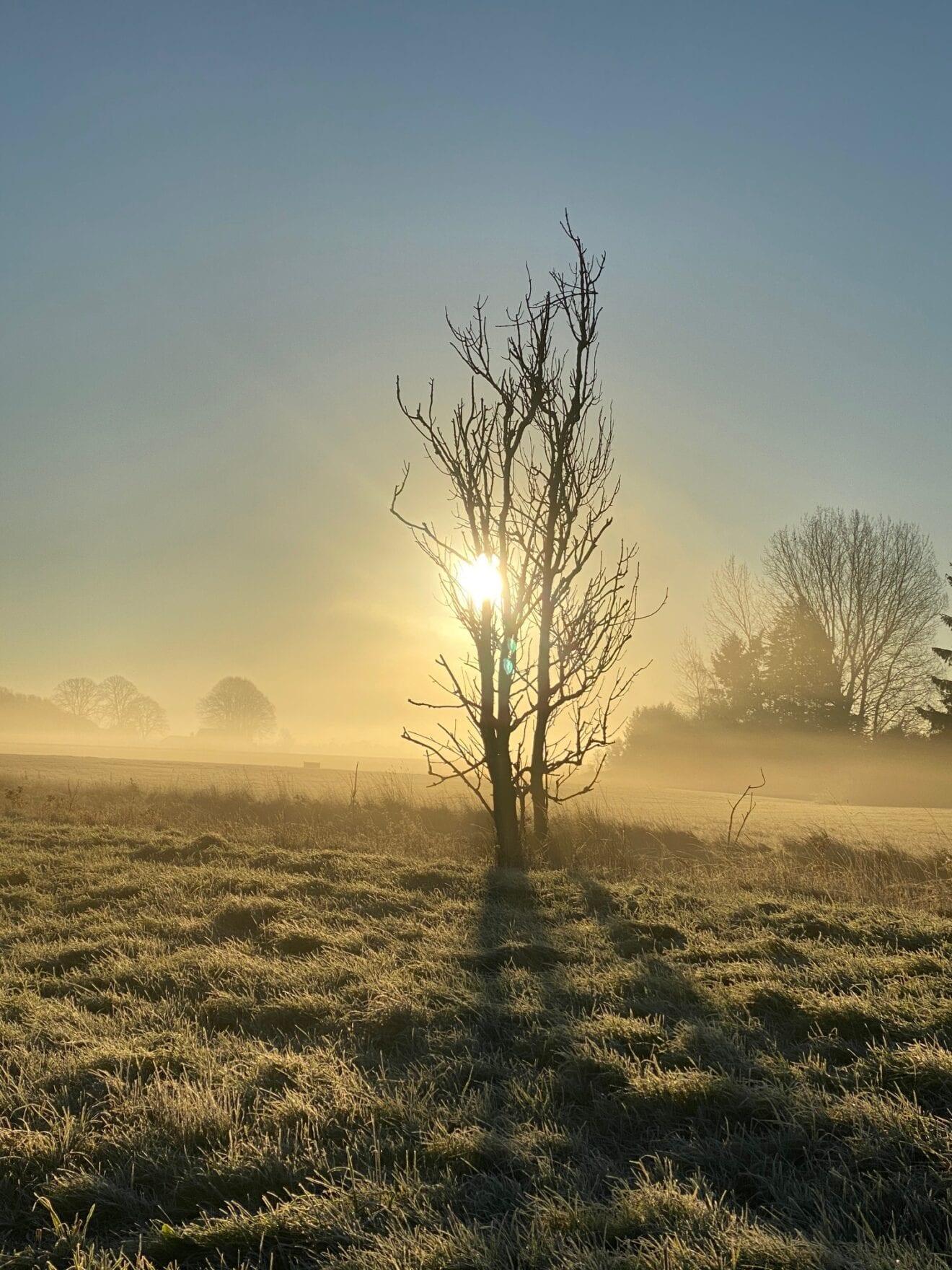 Morgenstund på Fælleden
