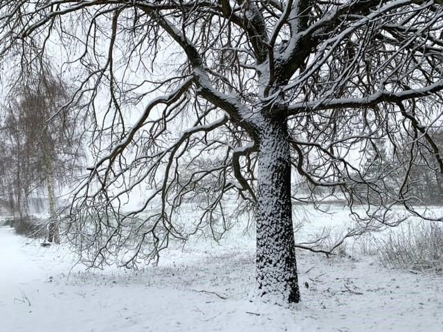 Den første sne over Tølløse
