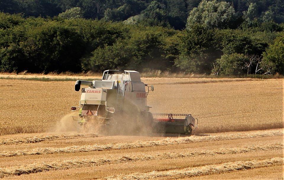 Landmænd overvejer skift til økologi