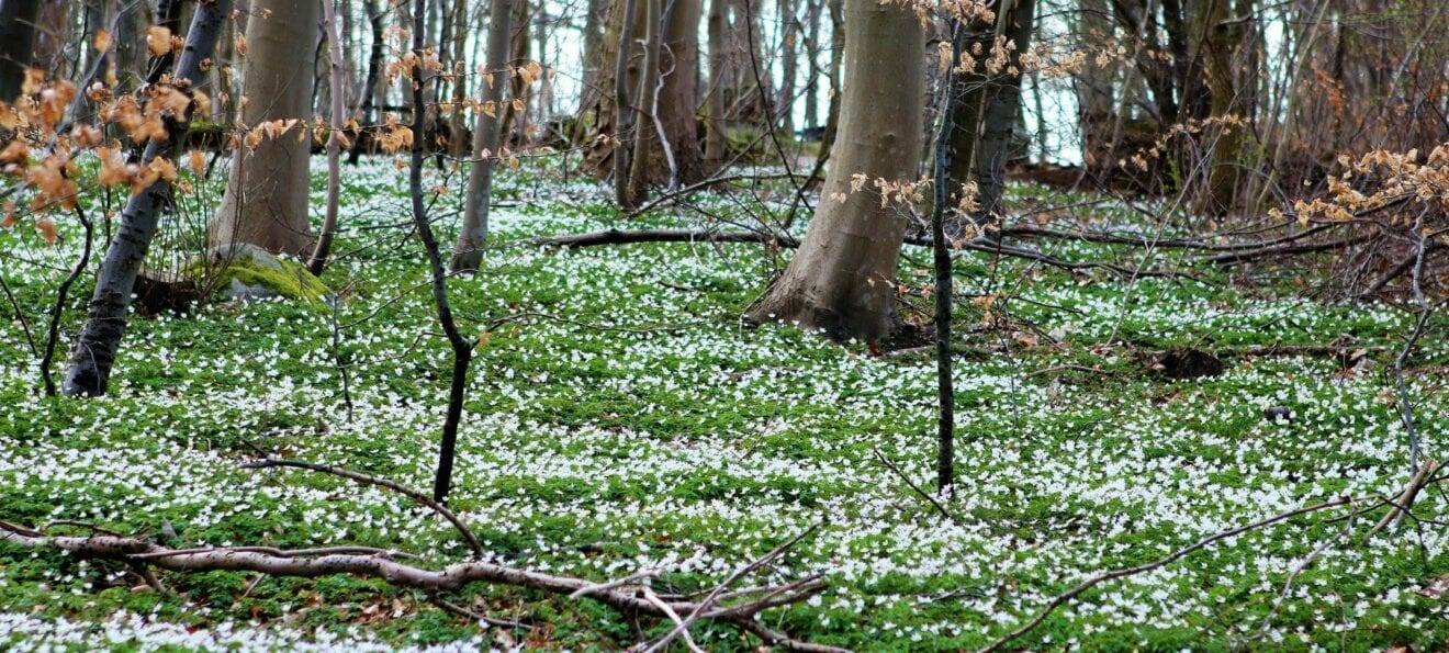 Folkeskov i Svinninge: Så kom de første træer i jorden
