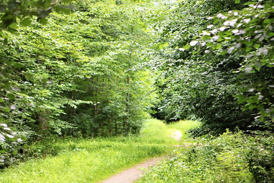 Vrede på de vestsjællandske skov- og naturstier
