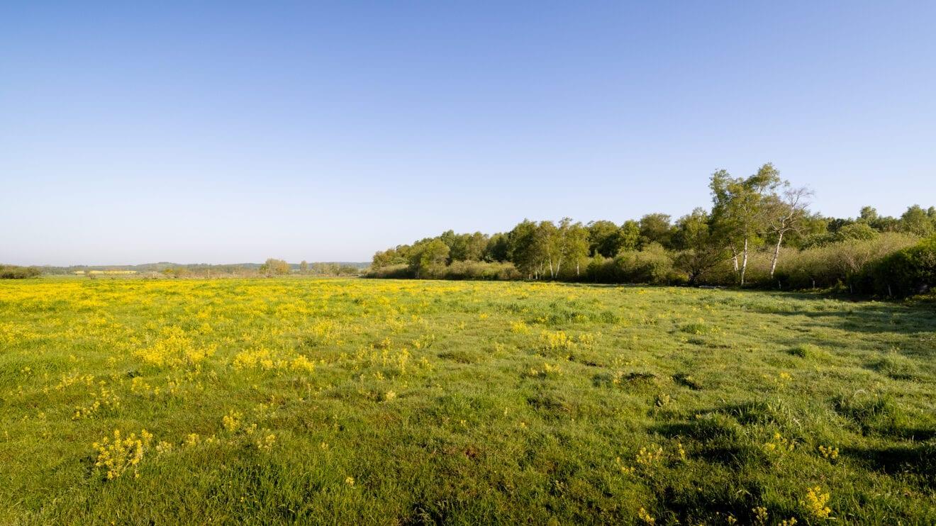 Sjællandsk mose genopstår til gavn for natur og klima
